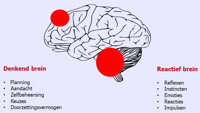 Denkend brein en reactieve brein